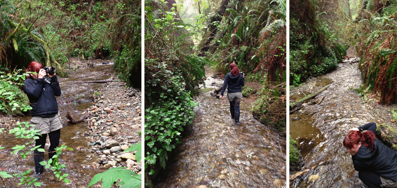 photographing fern canyon.