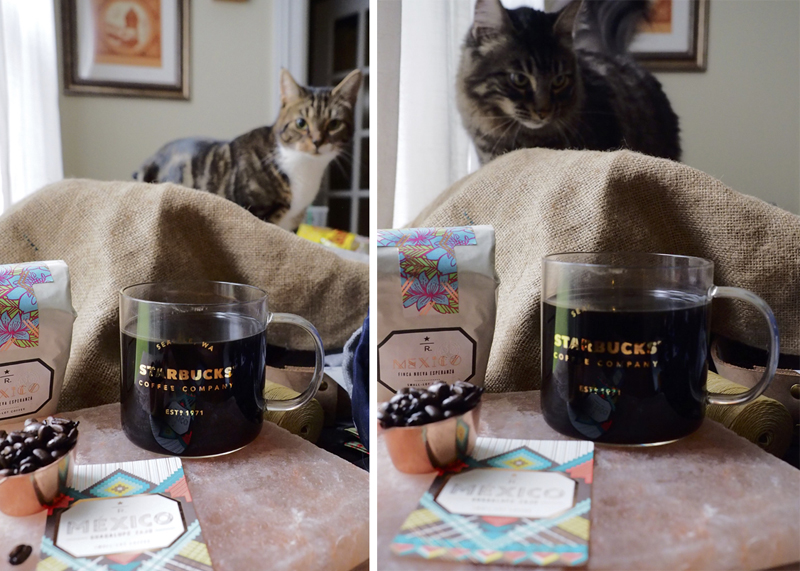 Coffee Master cats